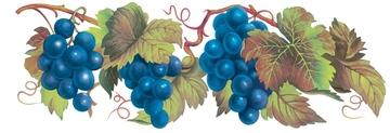 Прийом замовлень на саджанці винограду на весну 2021 року